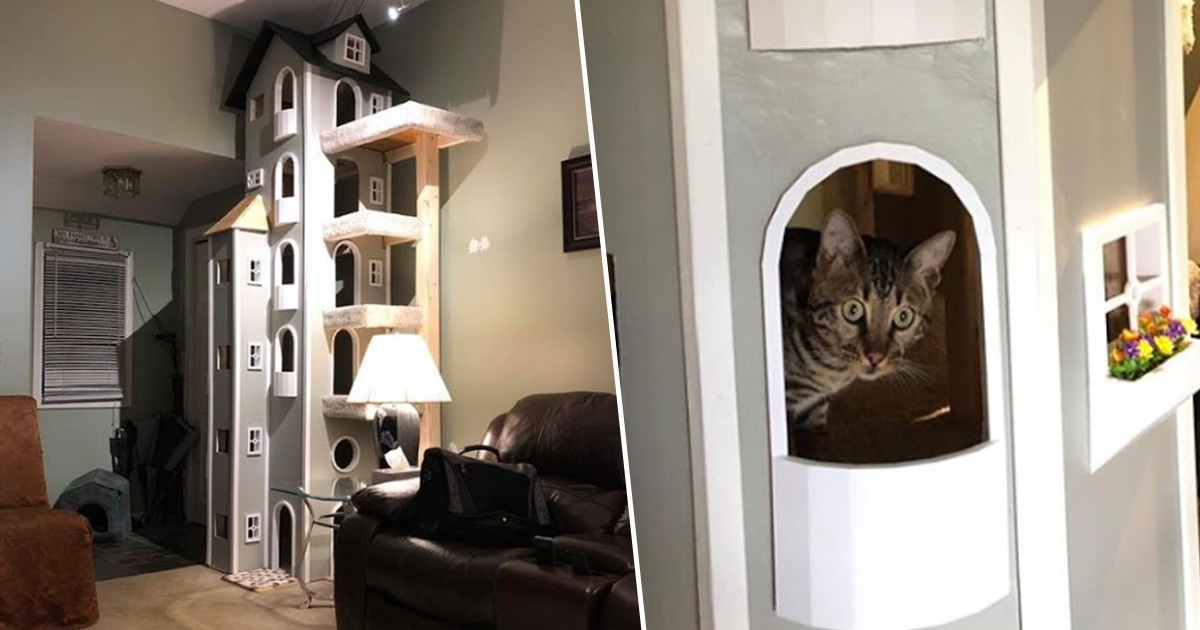 Connecticut Guy Builds Awesome 'Kitty Towers' In His Living Room