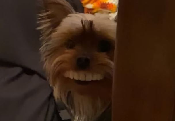 Dog steals his owners fake teeth