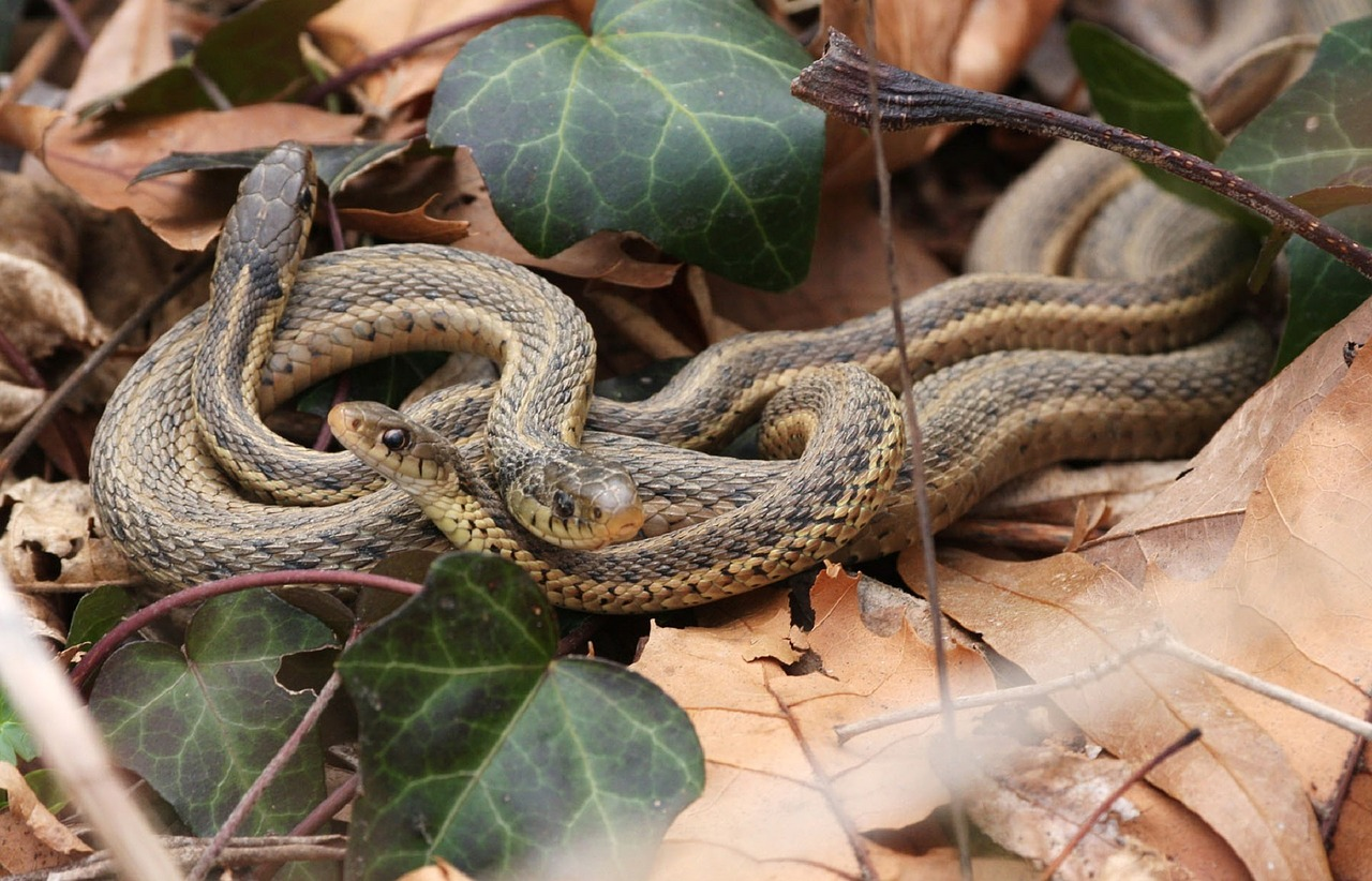 Snakes Form Social Cliques Just Like Humans, Study Suggests