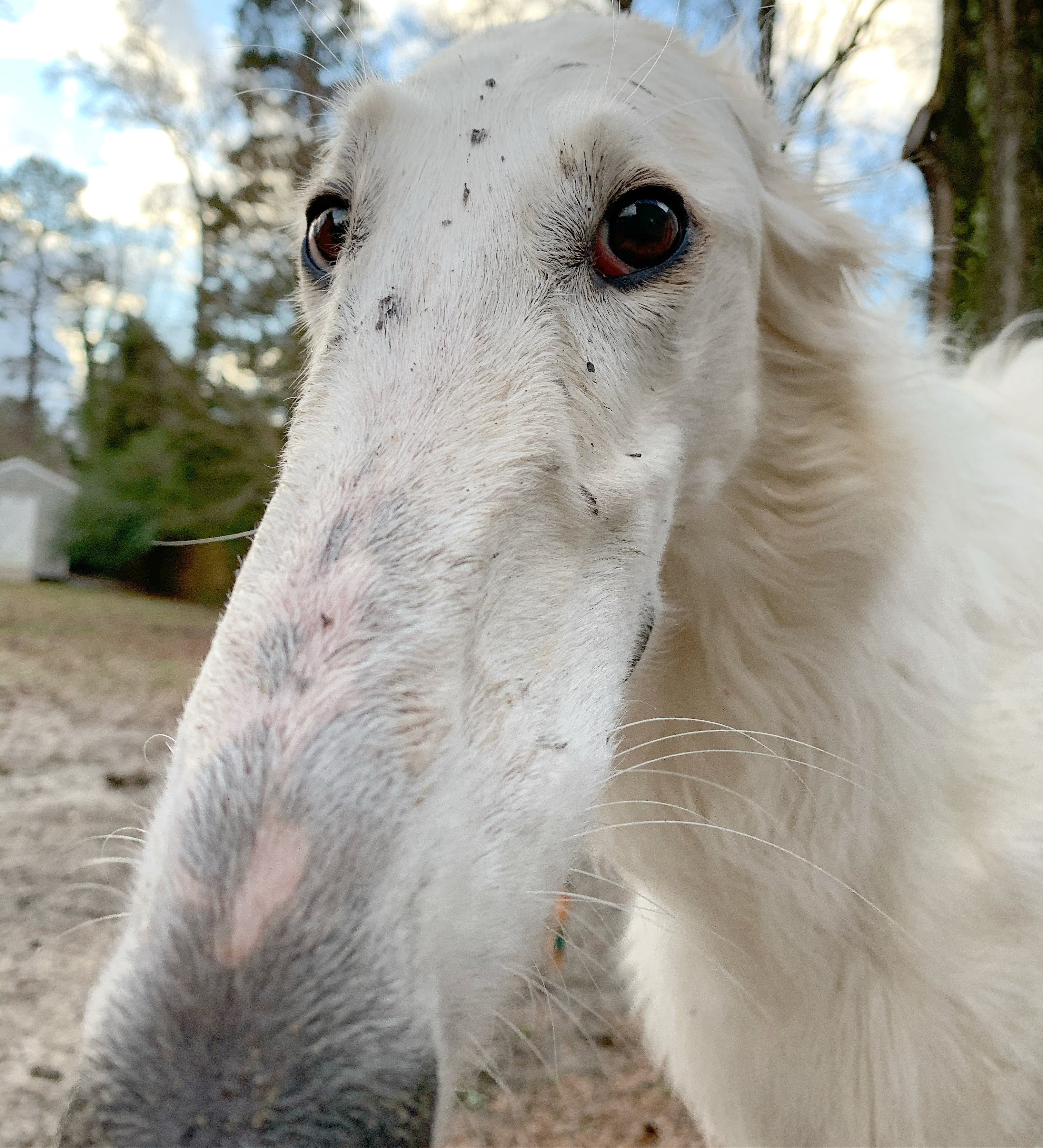 Long nosed-dog showing off snout