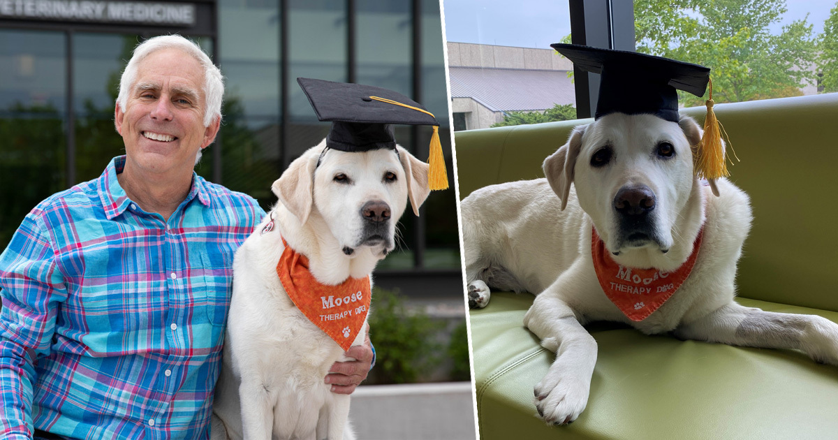 Moose the Therapy Dog Receives Honorary Doctorate Degree After Years Of Helping Students