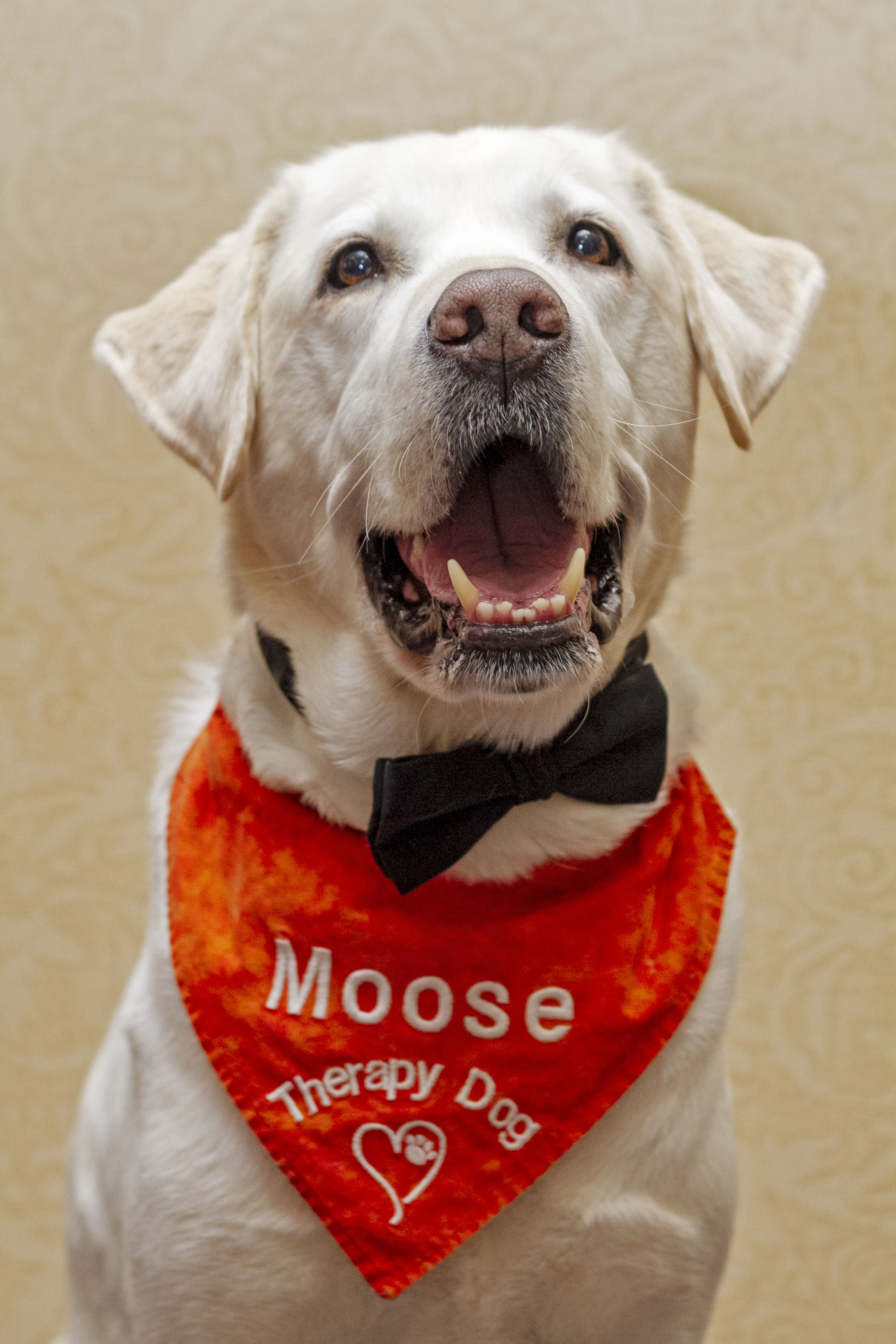 Moose Therapy Dog