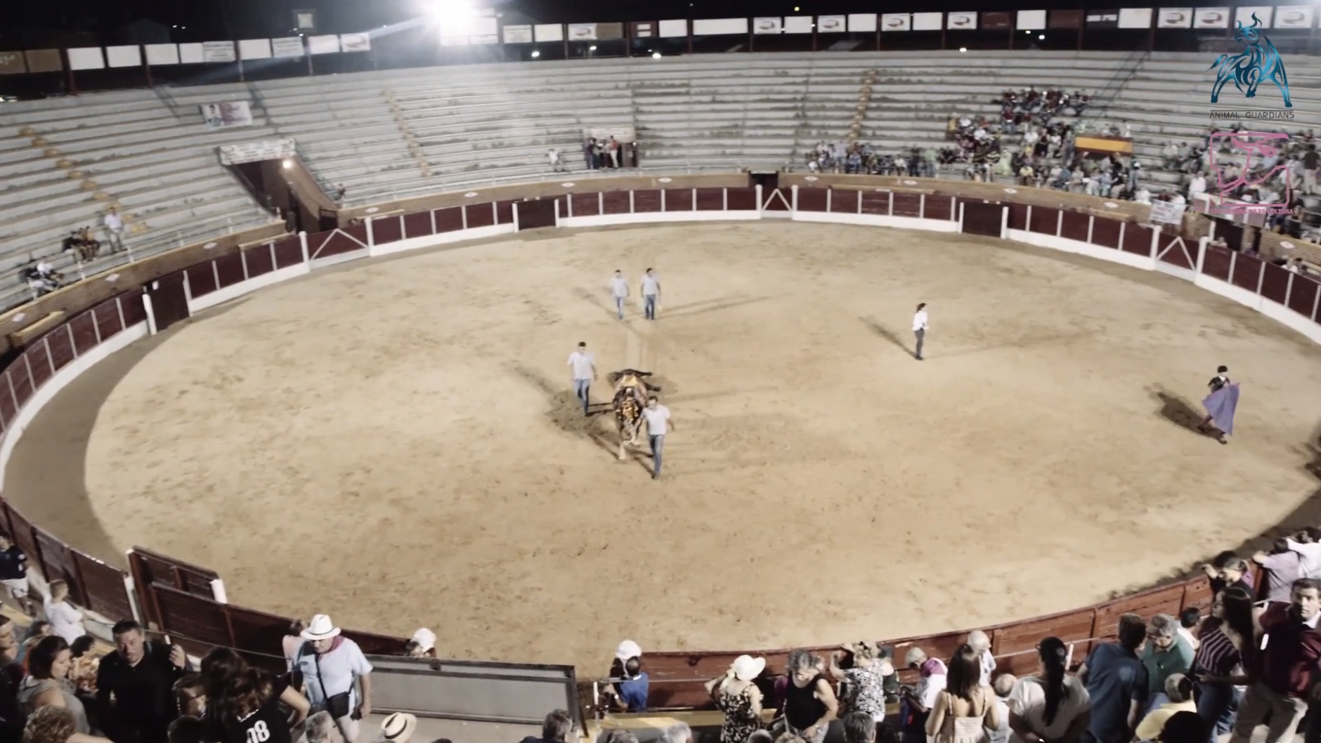 bullfighting bail out