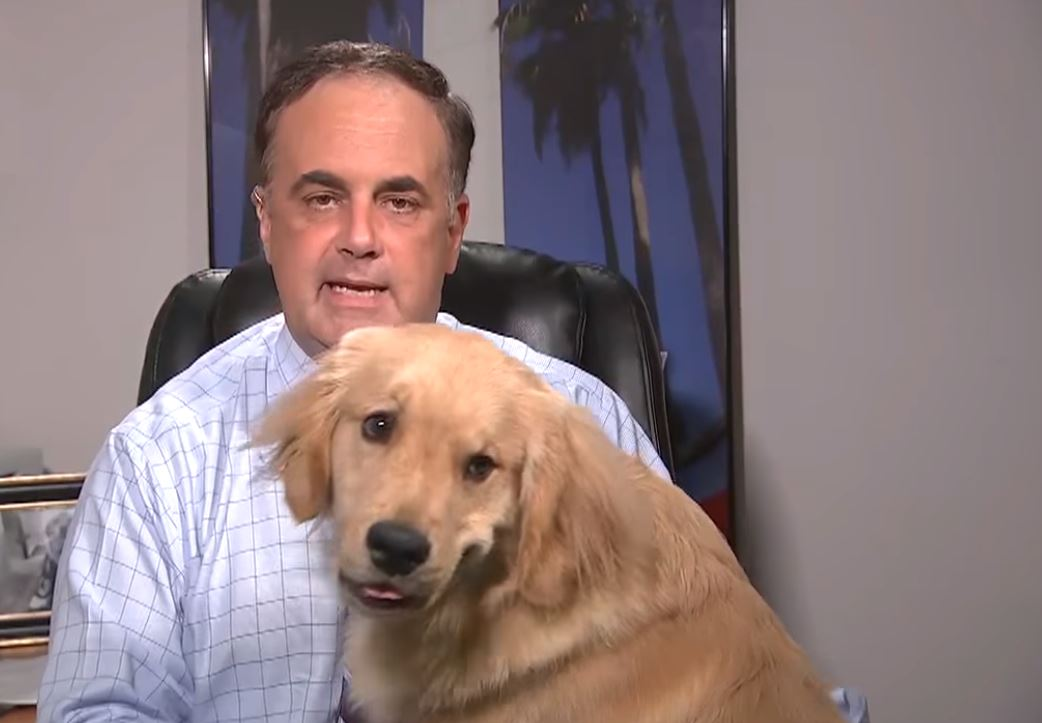 brody dog interrupts forecast