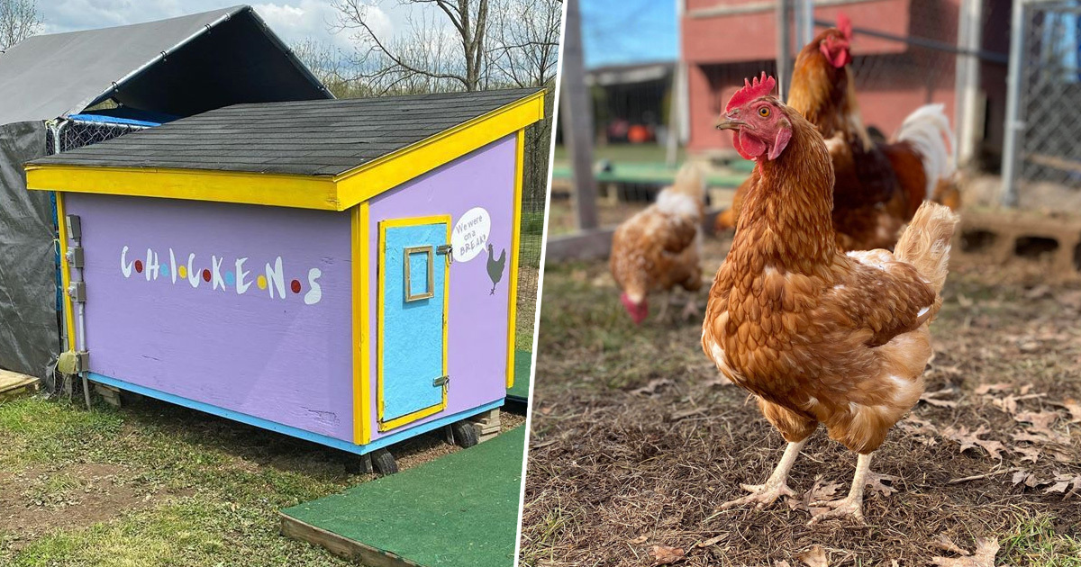 Ohio Woman Makes Incredible Friends-Themed 'Central Perch' Chicken Coop