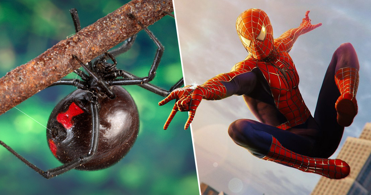Three Brothers Hospitalised After Letting Black Widow Bite Them To Become Spider-Man