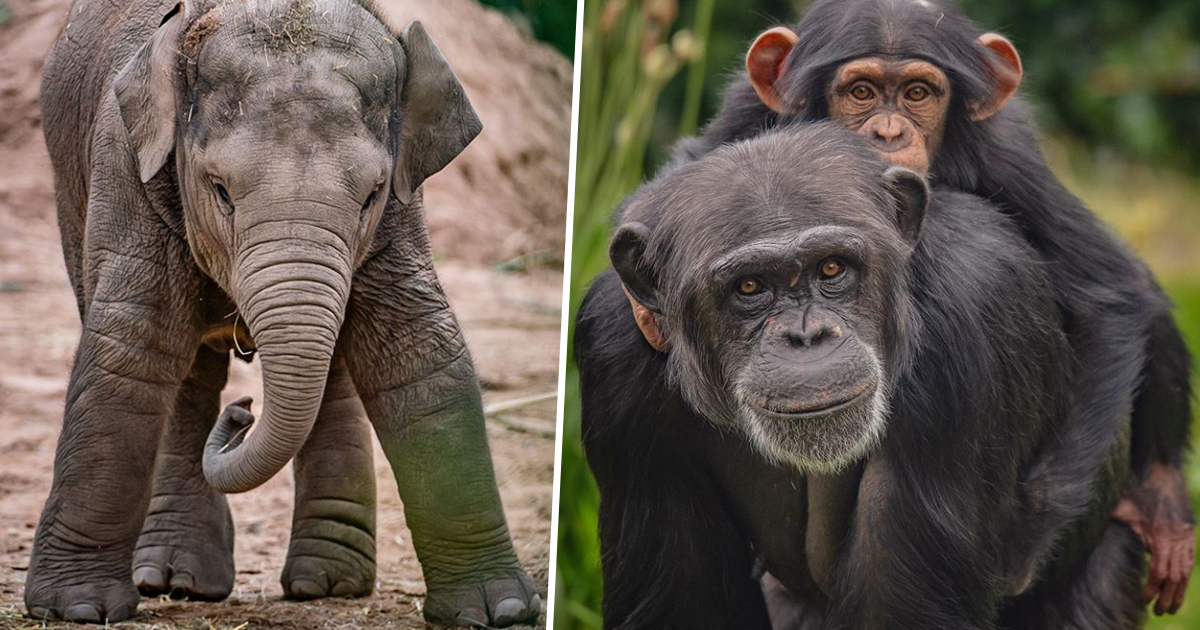 Zoo Makes Heartfelt Plea For Help After Being Asked To Close Its Doors Indefinitely