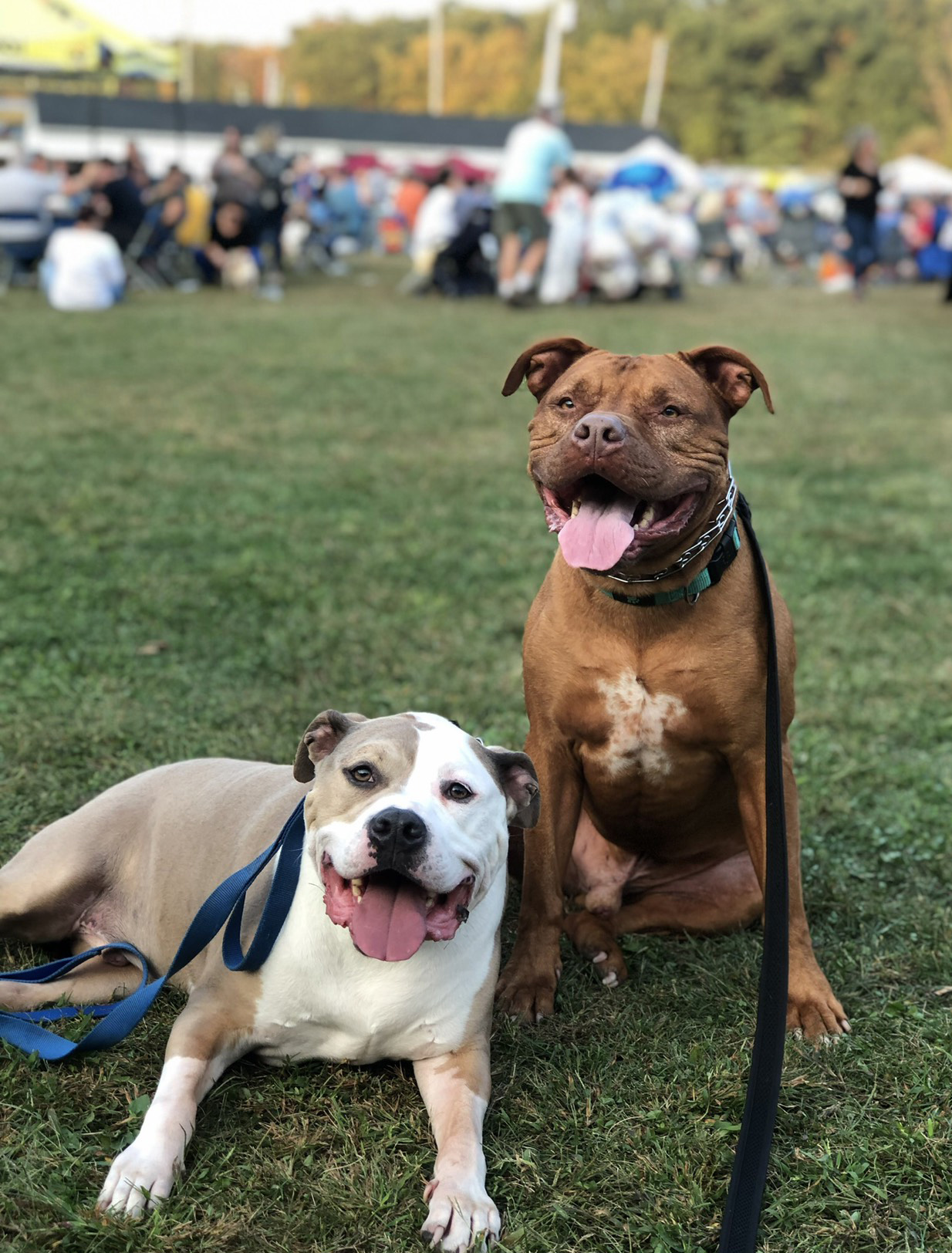 spanky and roman dogs