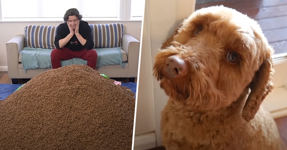 Liam Thompson YouTuber Guy Surprises His Dog With 1 Million Pieces Of Food