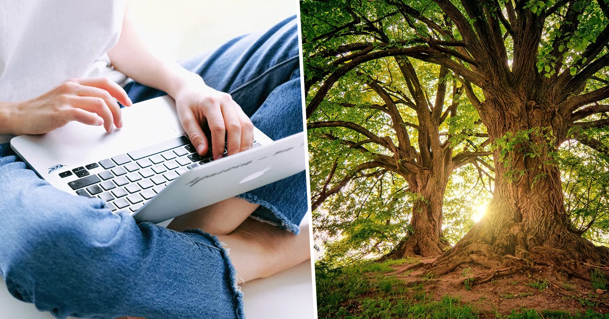 Green Search Engine Has Just Planted Its 100 Millionth Tree