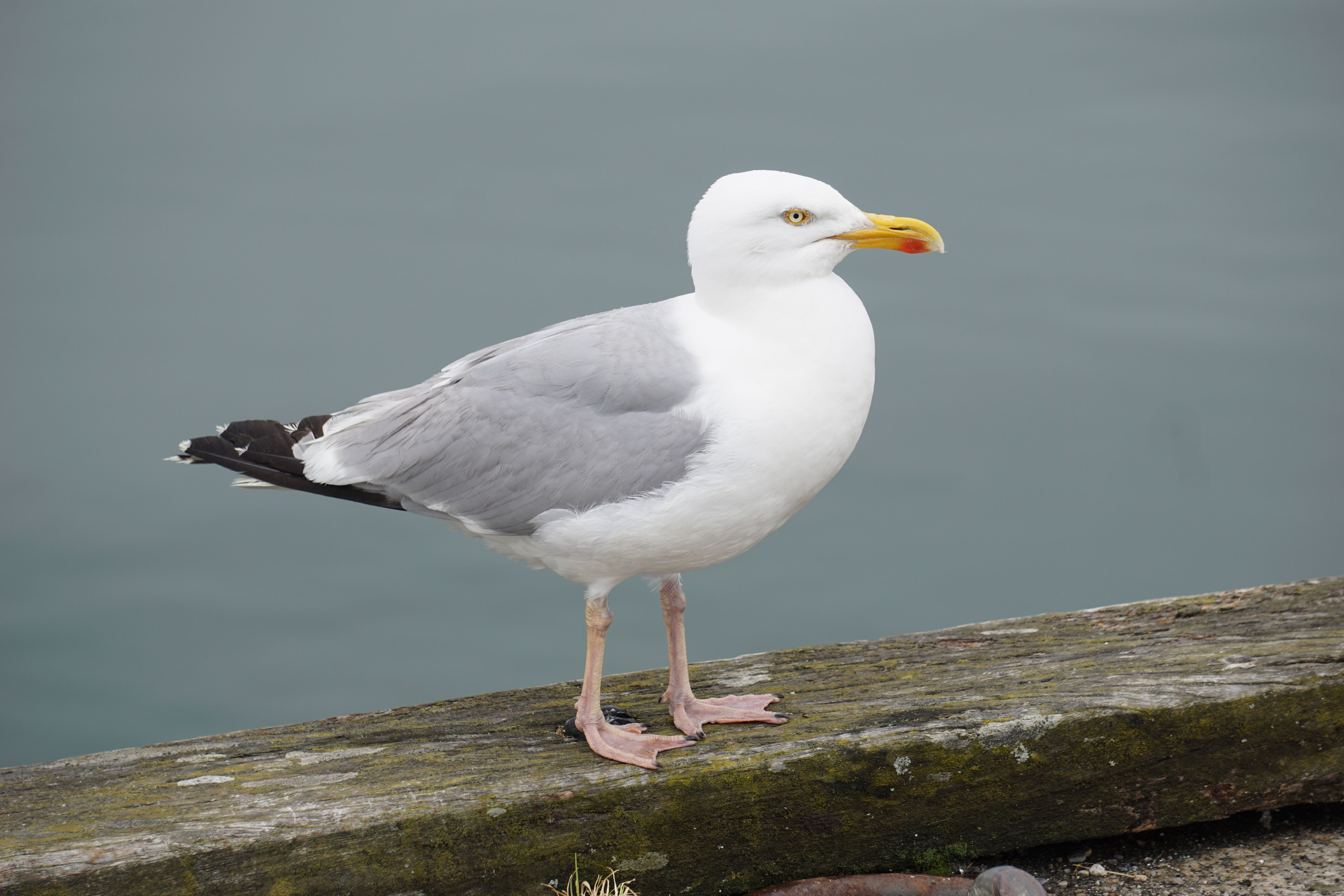 Man Detained After Biting Seagull Who Tried Stealing His McDonald's