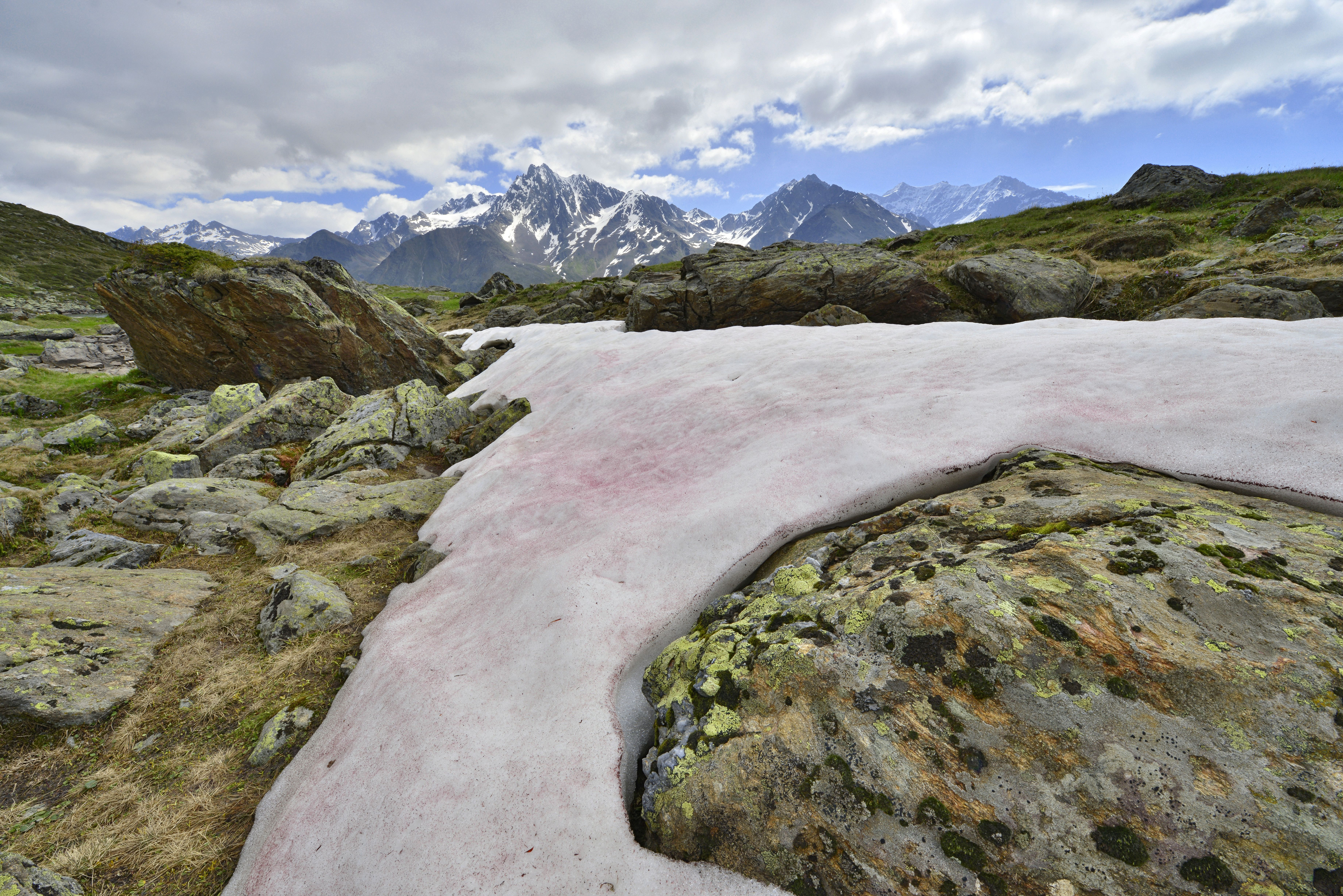 Bright Pink Snow In Italian Alps Is A Cute Sign Of Environmental Disaster