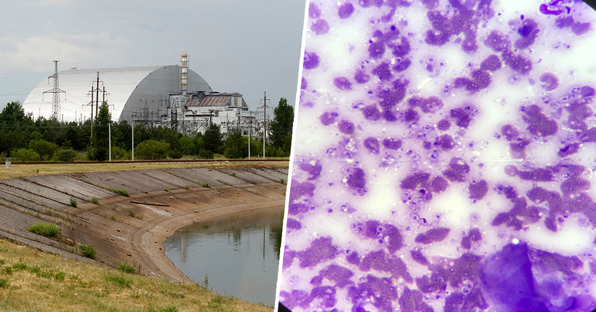 Fungus Found Growing In Chernobyl Nuclear Reactor 'Eats' Radiation