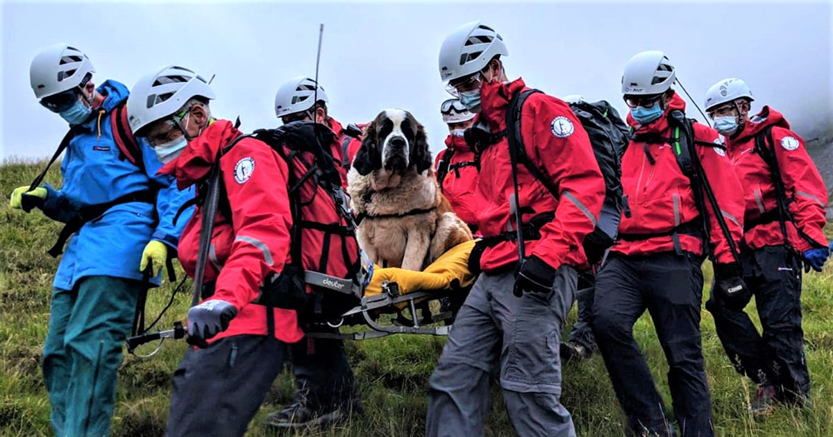 Rescue Dog Collapses On England's Highest Mountain, Has To Be Rescued