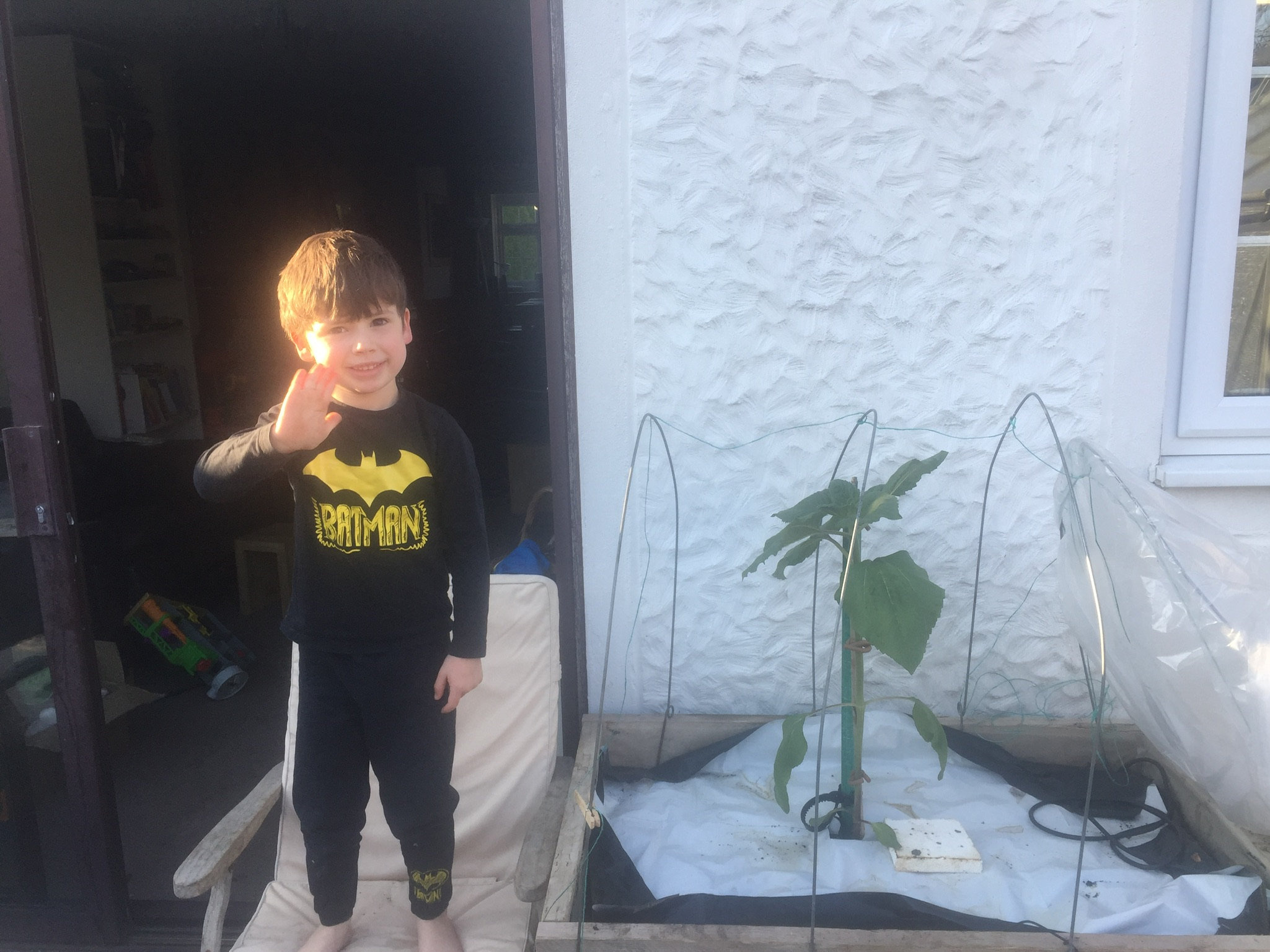 Four-year-old stood next to sunflower