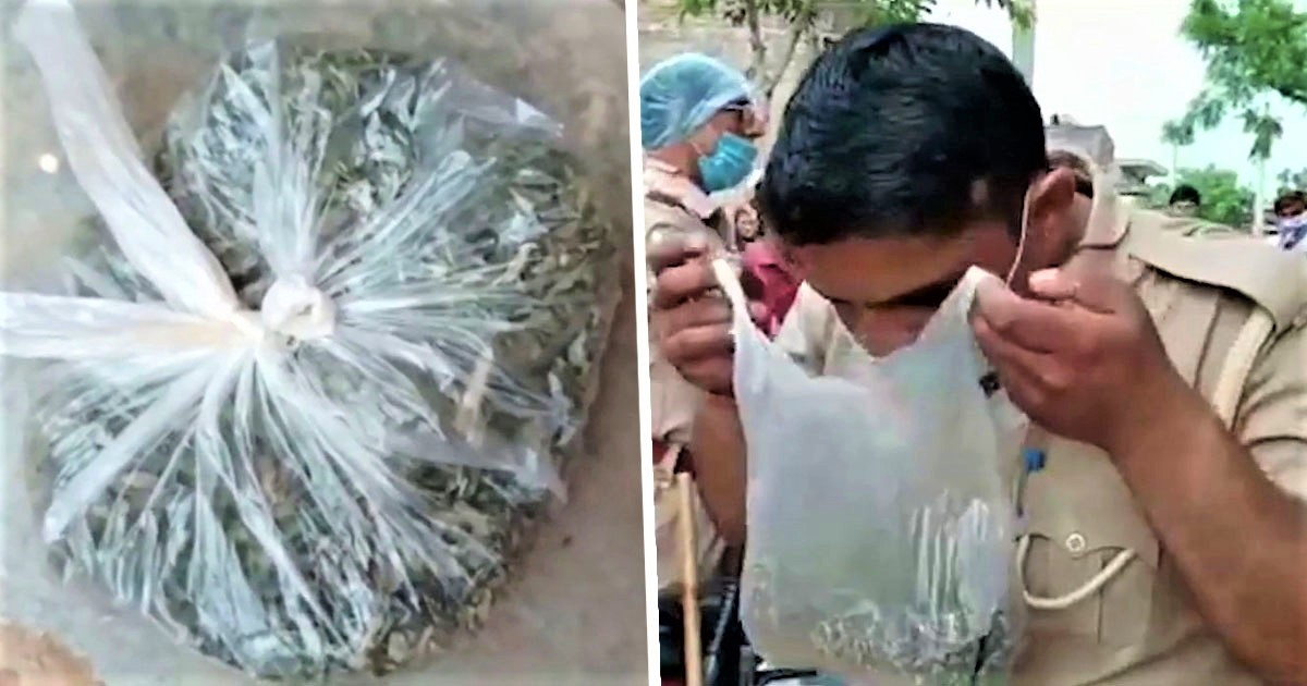 Family Hospitalised After 'Local Prankster' Gives Them Giant Bag Of Weed