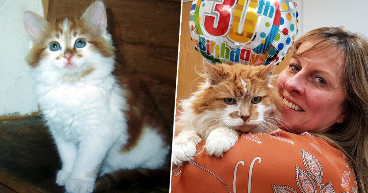 'World's Oldest Cat' Rubble, Who'd Be 150 In Human Years, Dies Aged 31