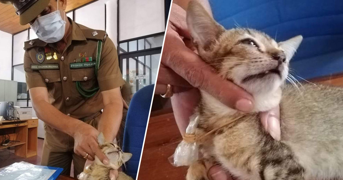 Cat Jailed For Smuggling Heroin Escapes Sri Lankan Prison