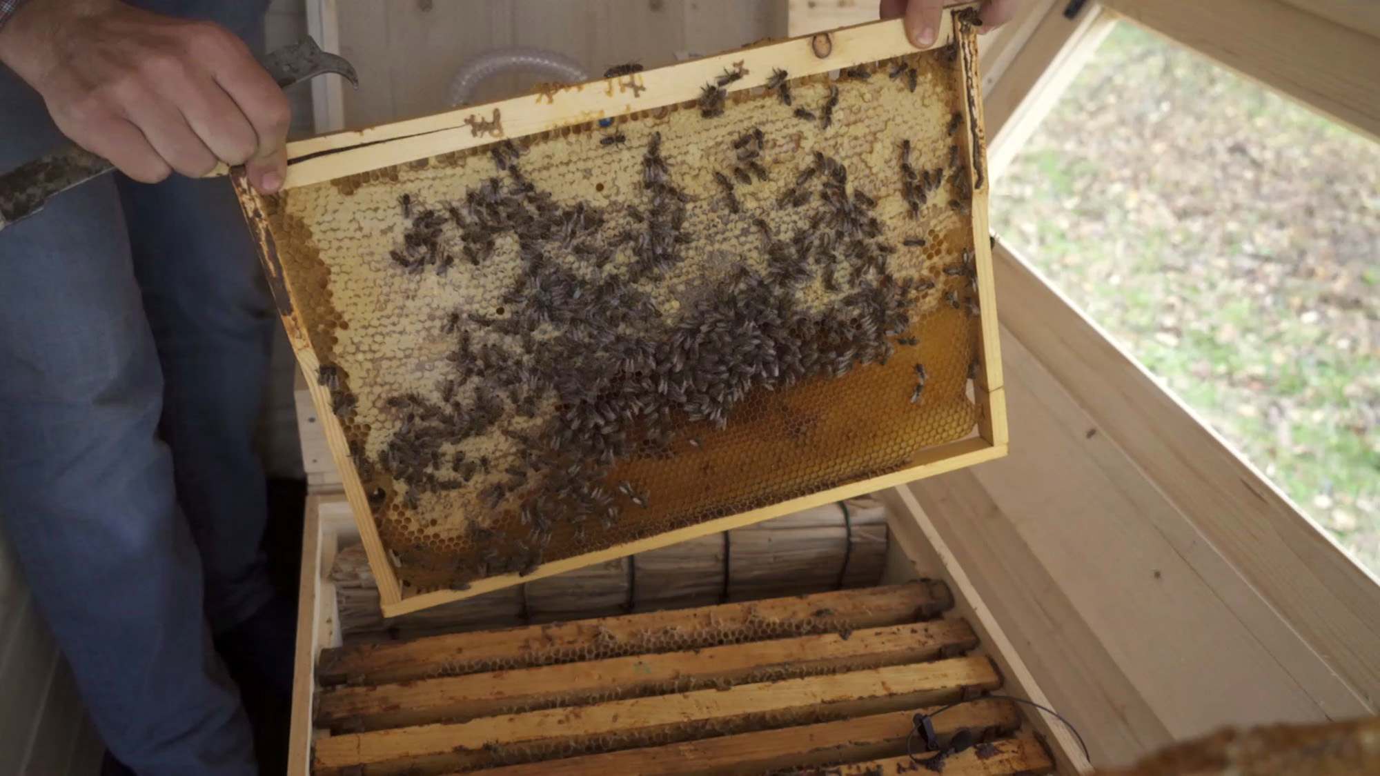 Bees in cabin