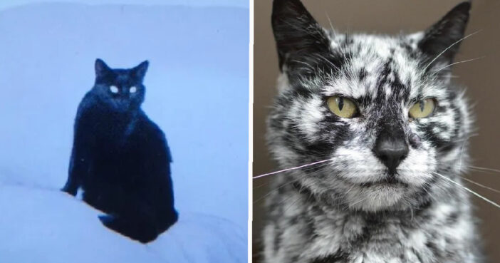 Black Cat's Fur Transformed Into Marble Pattern Aged 7