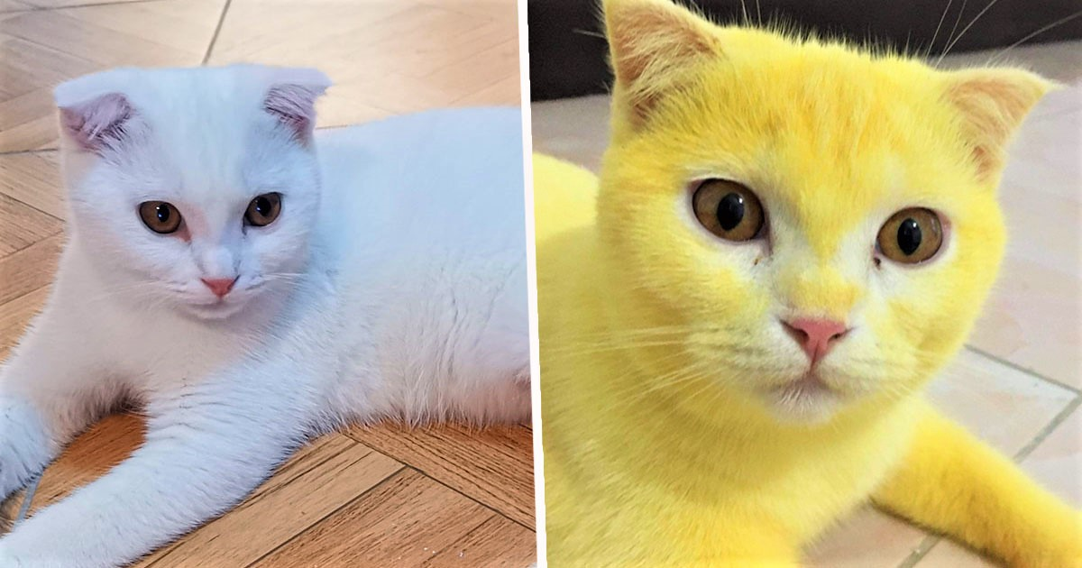 Woman Accidentally Turns Cat Yellow After Using Turmeric To Treat Infection