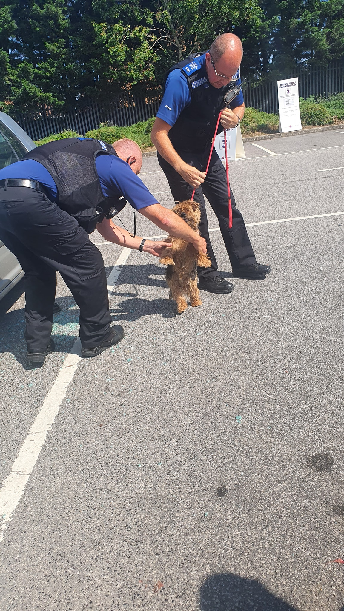 dog rescued from car