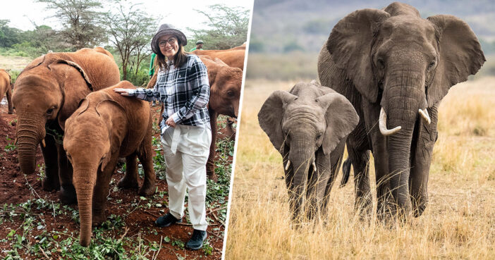 Elephant Population In Kenya Has Doubled In Last Three Decades