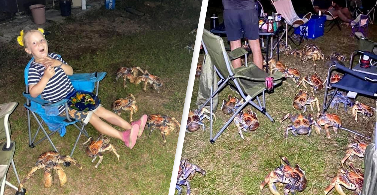 Family Barbecue Invaded By Cannibalistic Coconut Crabs