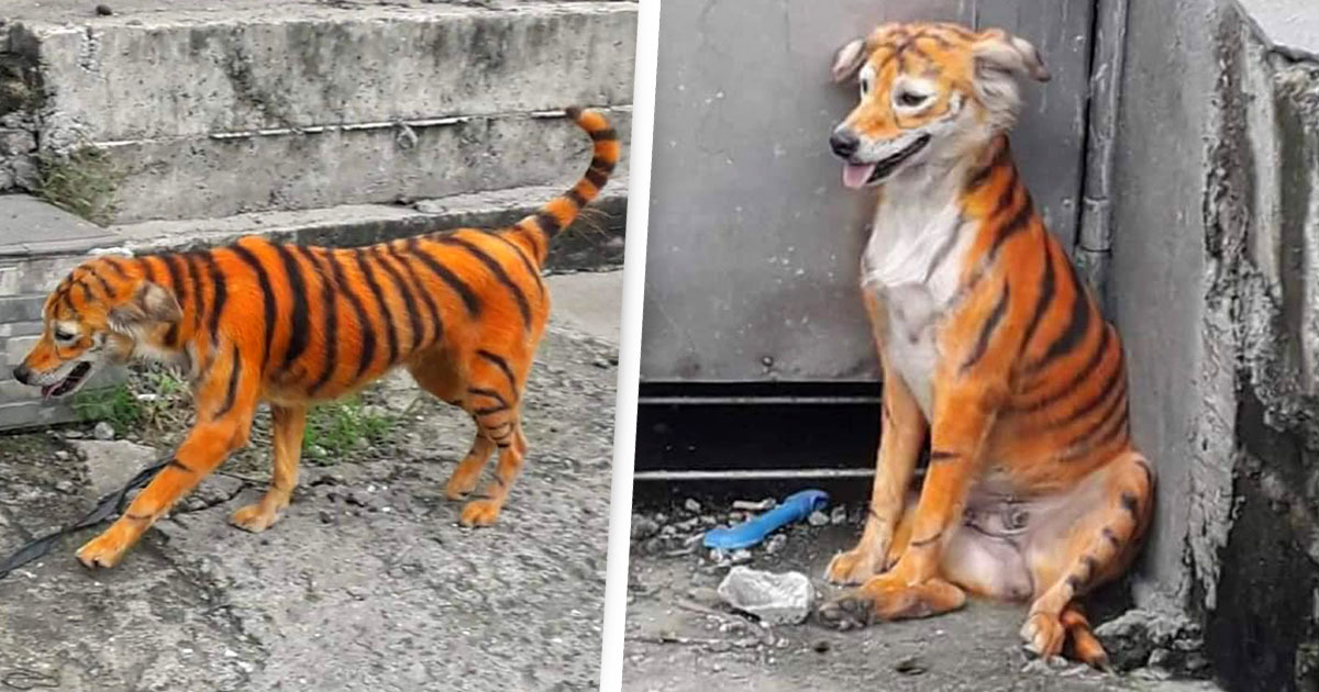 Anger As Stray Dog Painted To Look Like Tiger