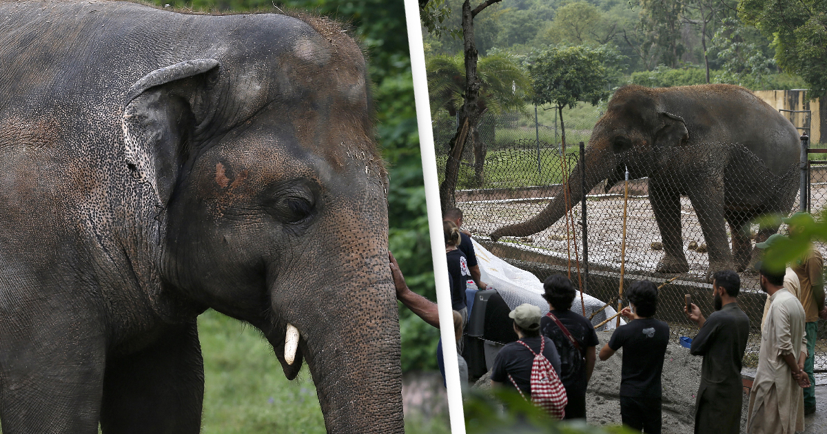 'World's Loneliest Elephant' Leaving Zoo In Pakistan For New Life