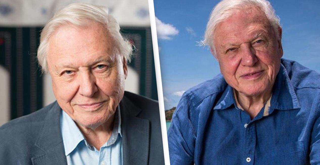 Sir David Attenborough Tells Us The Moment He Knew Climate Change Was A 'Life Or Death' Issue