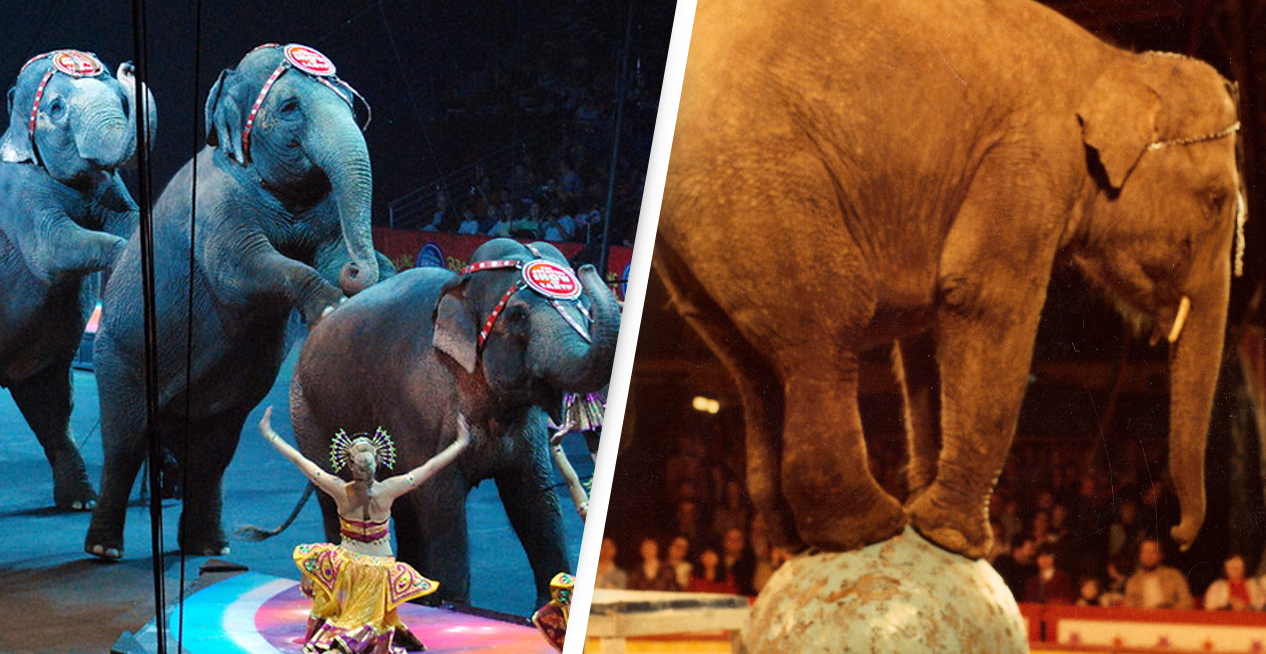 France To Ban Use Of Wild Animals In Circuses