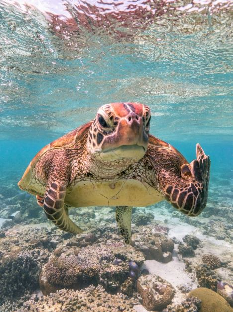 Turtle looks like it's giving the middle finger