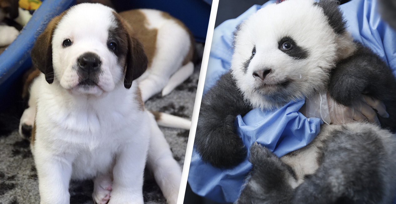Watching Cute Animals Can Reduce Your Stress Levels By Up To 50%