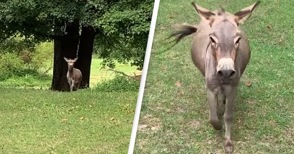 Donkey Cries Out With Joy Whenever He Sees His Favourite Person