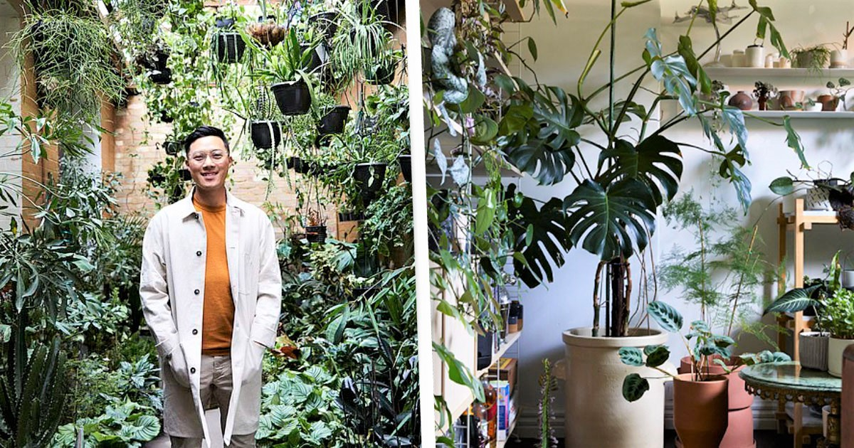 Melbourne Guy 'Obsessed' With Plants Turns His Home Into An Indoor Rainforest