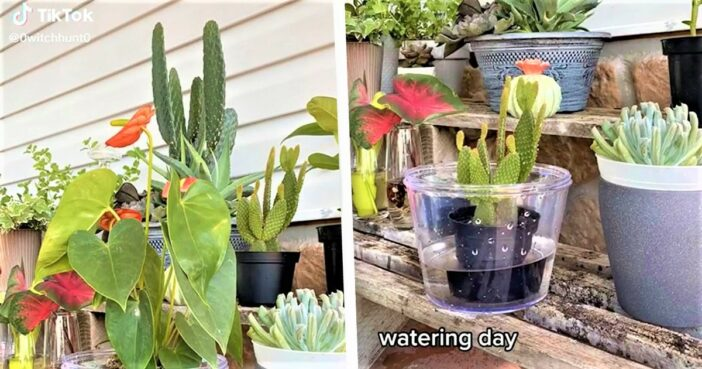 TikTok Hack For Watering Plants Proves We've All Been Doing It Wrong