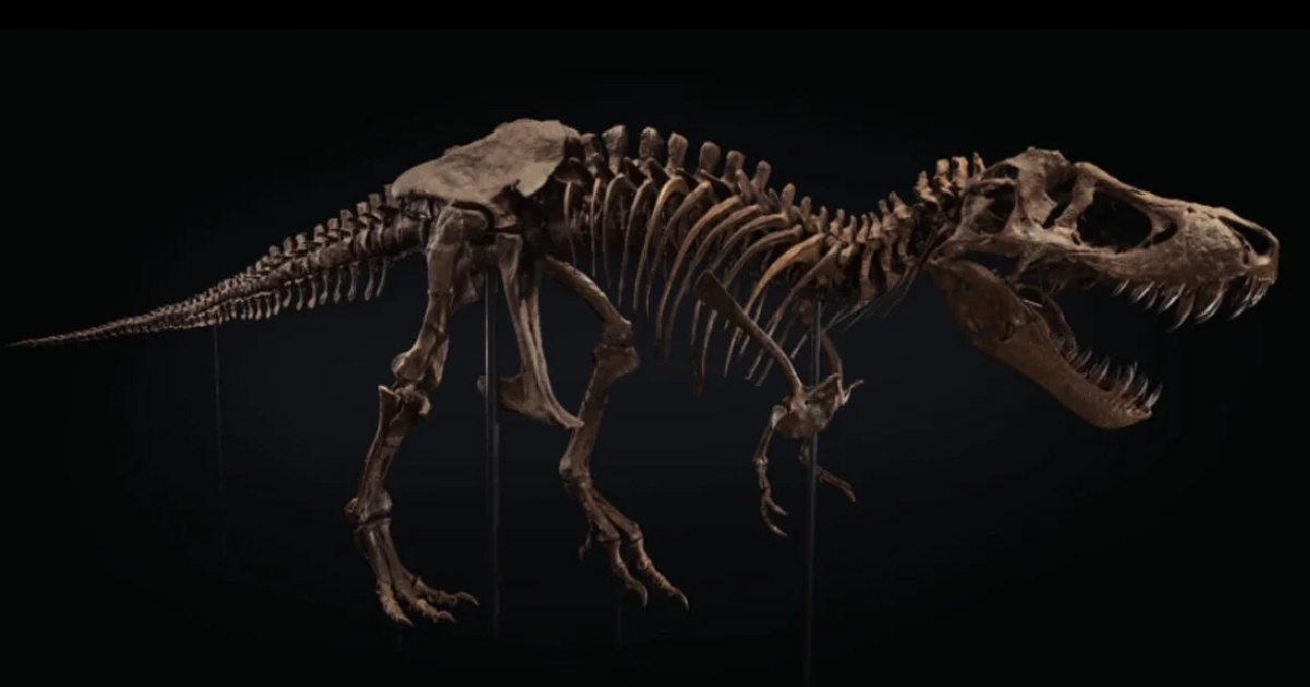 t-rex skeleton called stan up for auction 1