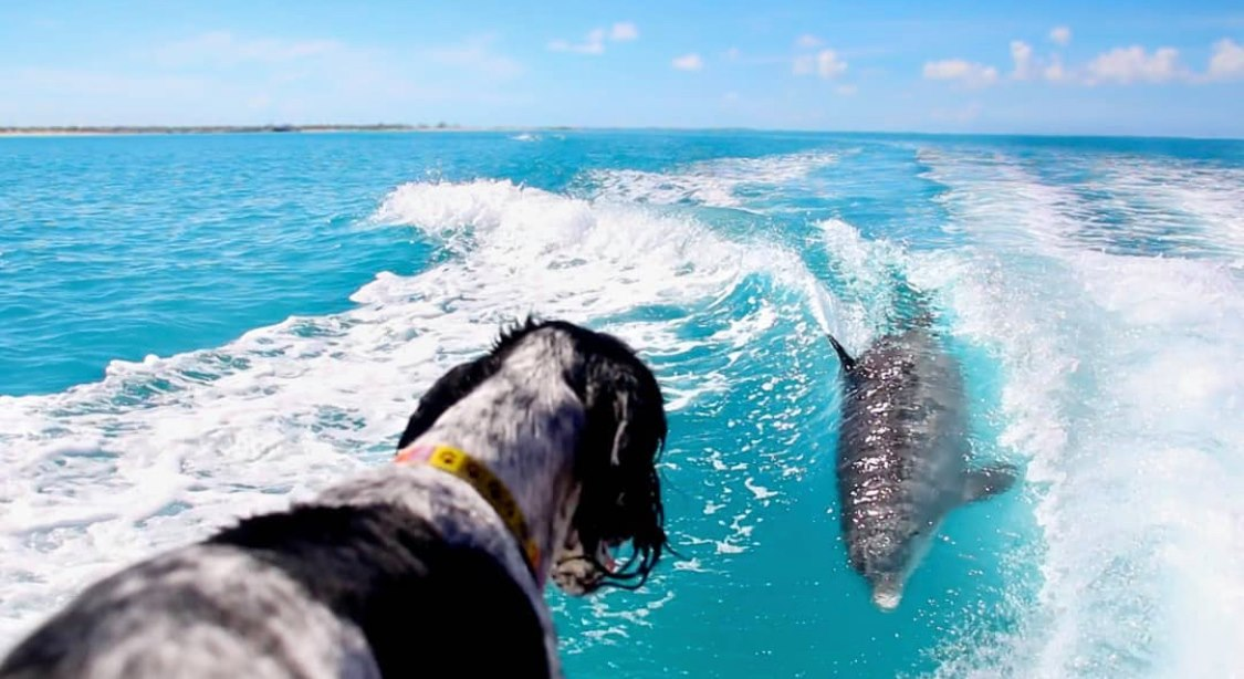 A Dog and his Bottlenose Dolphin best friend have become viral sensations after being filmed adorably playing with each other in the ocean