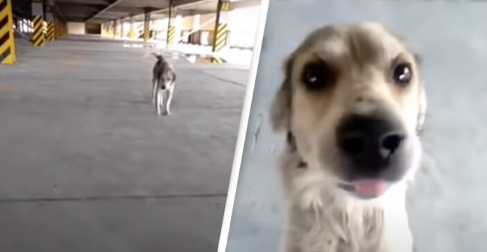 Dog Who Was Missing For Months Cries When His Dad Finally Finds Him