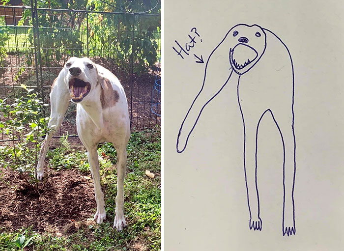 Rubbish Dog Drawing Wins Contest Over Artist's Drawing