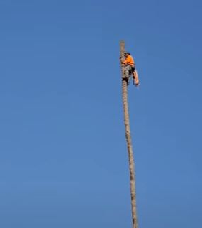 Tree surgeon catapulted through the air after cutting palm tree