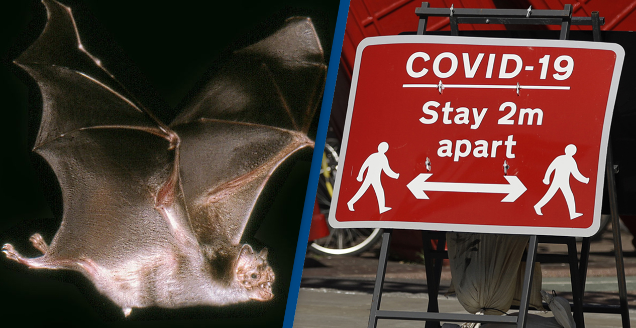 Vampire Bats Socially Distance When They're Sick, Study Finds