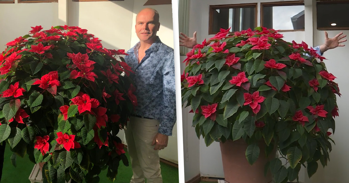 Montreal Man's 'Crappy, Half-Dead' $5 Plant Just Won't Stop Growing