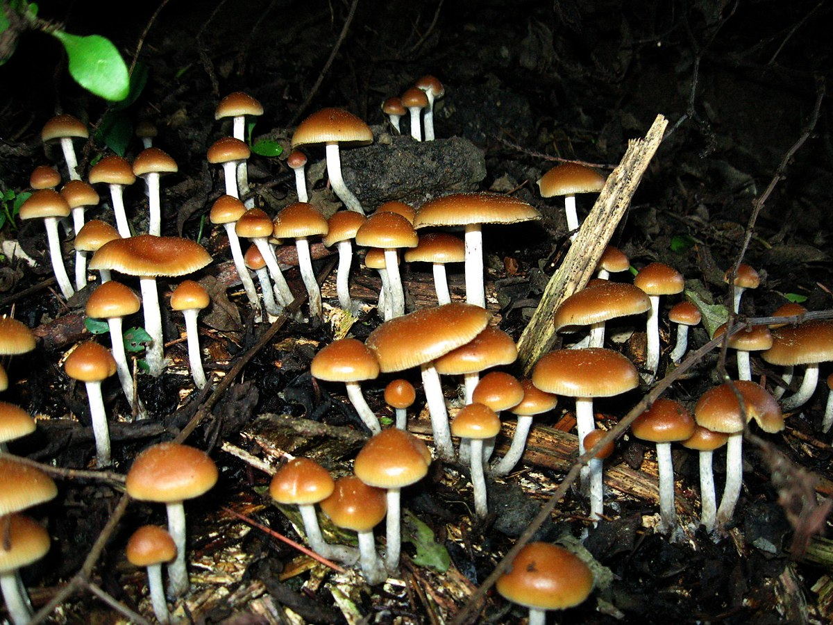 Canada Is Allowing People With Depression To Do Psychedelic Mushrooms