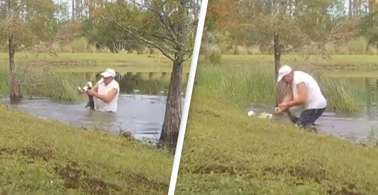 Man Pulls Alligator Out Of Water And Pries Its Jaws Open To Save His Dog