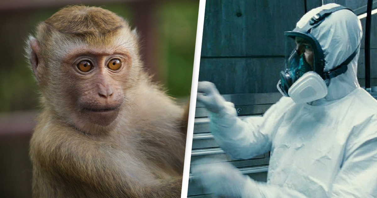 Scientists Double Size Of Monkey's Brain Using Human Genes