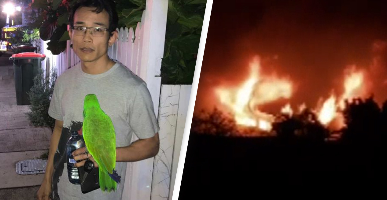 Pet Parrot Saves Man From House Fire By Squawking His Name