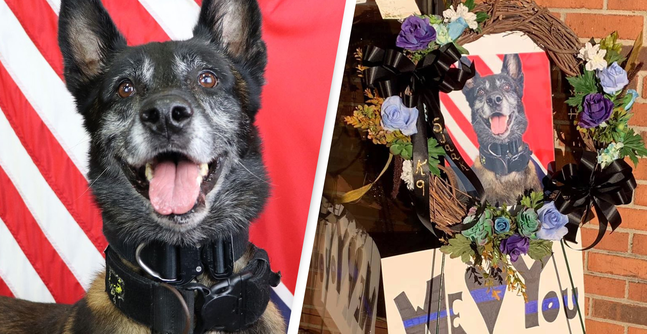 Police Dog To Be Buried With Full Honours After Being Killed In Line Of Duty