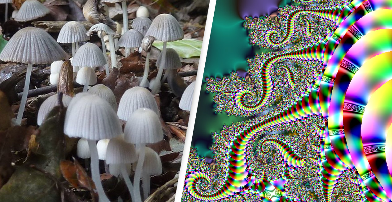 Largest Psychedelics Company In The World Just Raised Record $157 Million